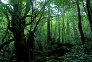 Travel Tips: What to do in Yakushima, A Natural Wonder