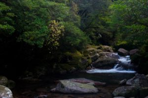 Travel Tips: Where in Japan is Yakushima?