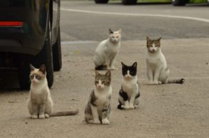 Watching City Like Cats by Cat Street View