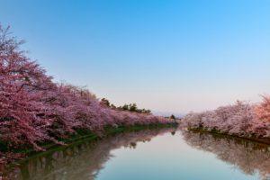 Celebración de primavera en Japón: Hanami