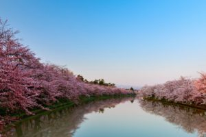 "Japan's Spring Event ""Hanami"""