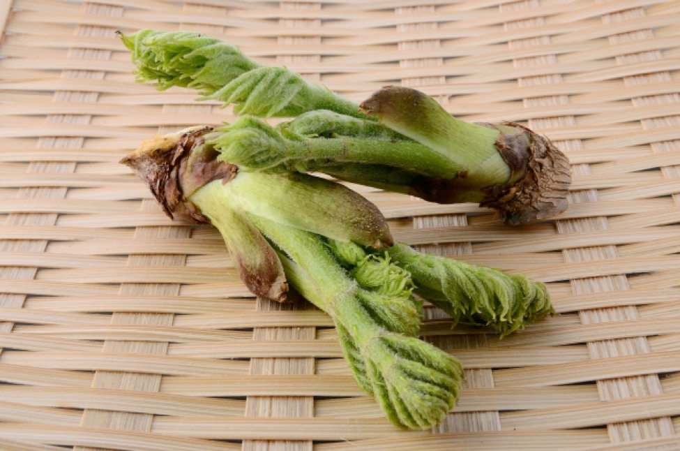 Japanese spring vegetables taranome