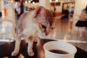 TOP5东京都内动物主题咖啡厅——让动物们来治愈你吧!