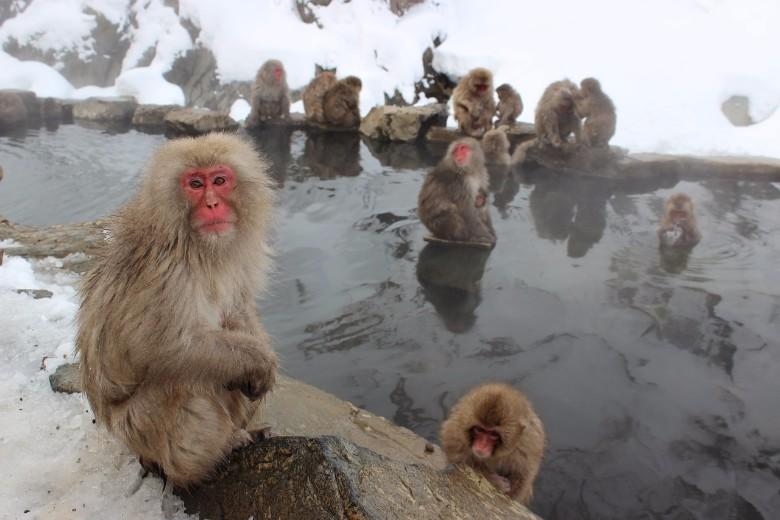 Jepang untuk Turis: Jelajahi Jepang dalam 30 hari