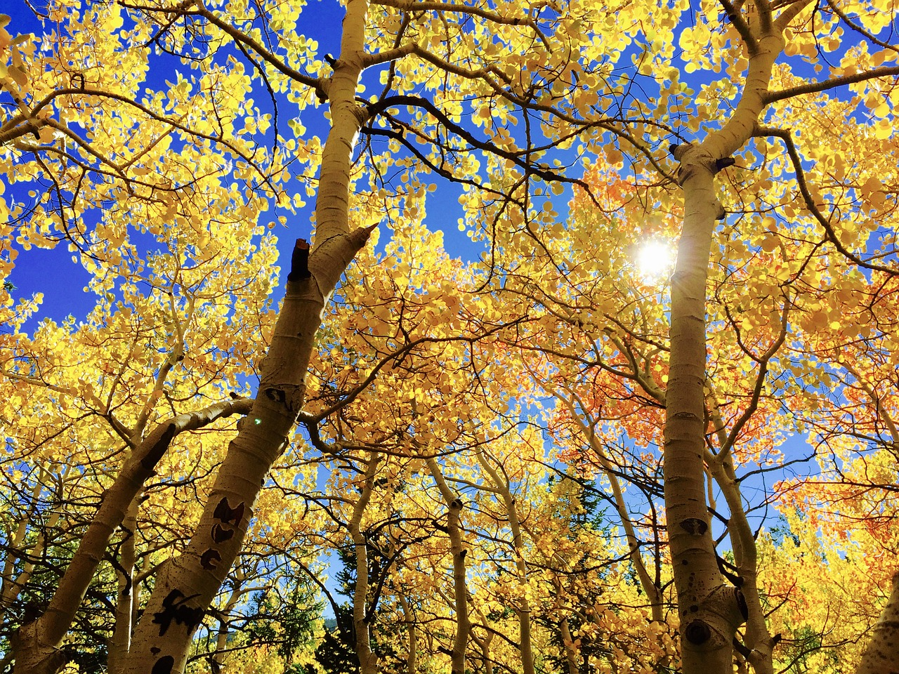5 Special events you can only enjoy in Autumn
