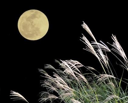 Jyugoya tale: Rabbits Living on the Moon?