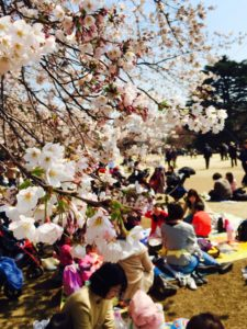 Simple Tips for enjoying Cherry Blossom Season in Japan