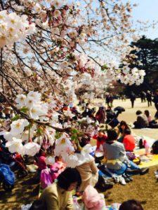 Những Điều Đơn Giản mà Người Nước Ngoài Cần Biết khi Đi Ngắm Hoa Anh Đào ở Nhật Bản