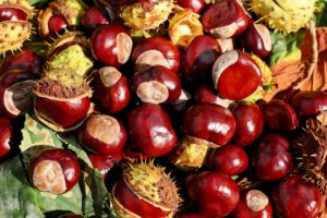 Chestnuts? Kuri? Marron? How to Enjoy Chestnuts in Japan!