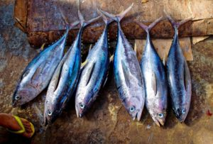 5 Best Fish in Season! Autumnal Fishy Feasts in Japan