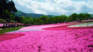 Rethinking the 'Boring Saitama' Myth