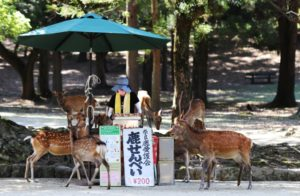 New COVID-19 Blood Examination, Heartbreaking Nara Deer【Today's Top 5 Japanese Trends!】