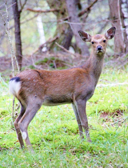 Gaijin Hunter's Prey, gaijin hunter