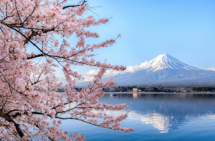 Cherry blossom, Sakura, Hanami, Fuji san