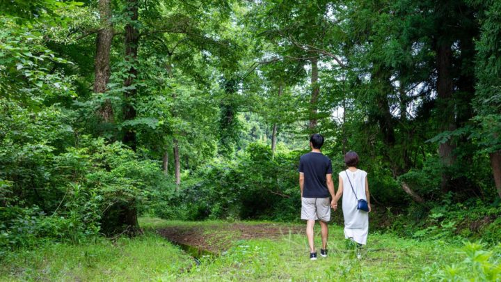 summer vacation autumn leaves lotte activity forest walk