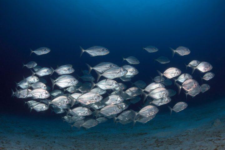 illegal fishing eel in japan
