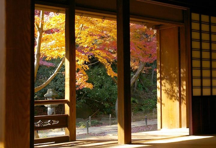 Autumn leaves Sankeien (Yokohama, Kanto Region)