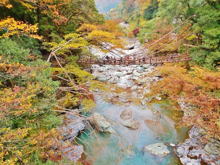 Autumn leaves Iya Valley (Tokushima, Shikoku)