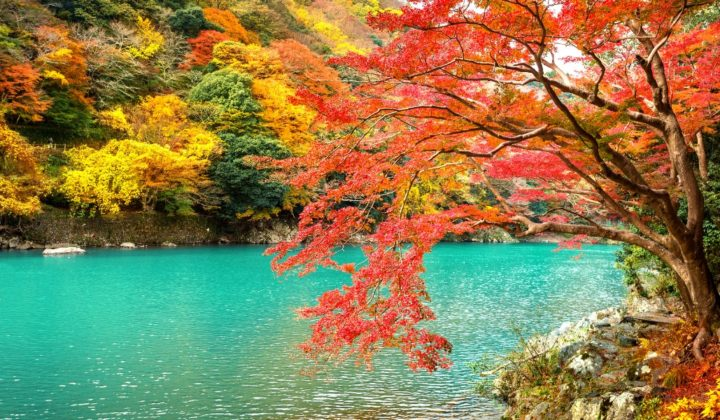 tokyo and kyoto autumn leaves features